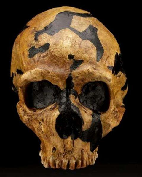479px-Shanidar_skull